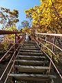 天桥沟红枫谷
