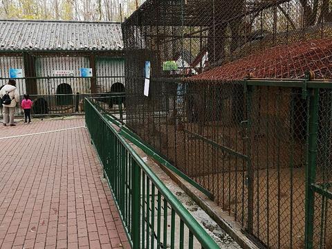 蒲园动物园旅游景点图片