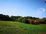 雁鸣湖休闲公园