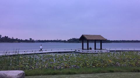 凤凰湖的图片