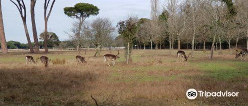 Ente Parco Regionale Migliarino San Rossore Massaciuccoli旅游景点图片
