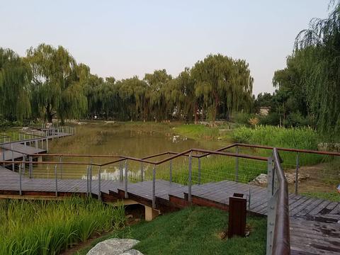 树村郊野公园