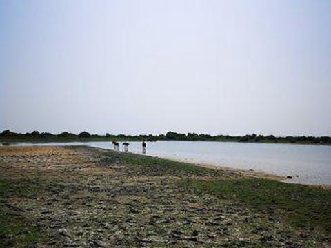 Neduntheevu (Delft Island)旅游景点图片