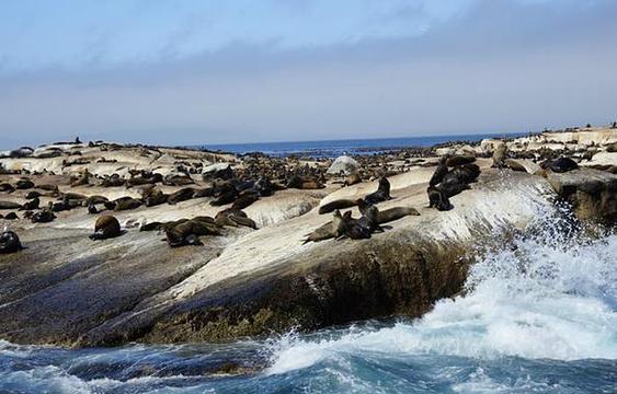 海豹岛旅游景点图片