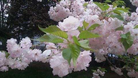 铜川牡丹园的图片
