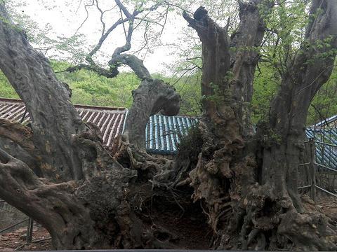 龙脊山旅游景点图片
