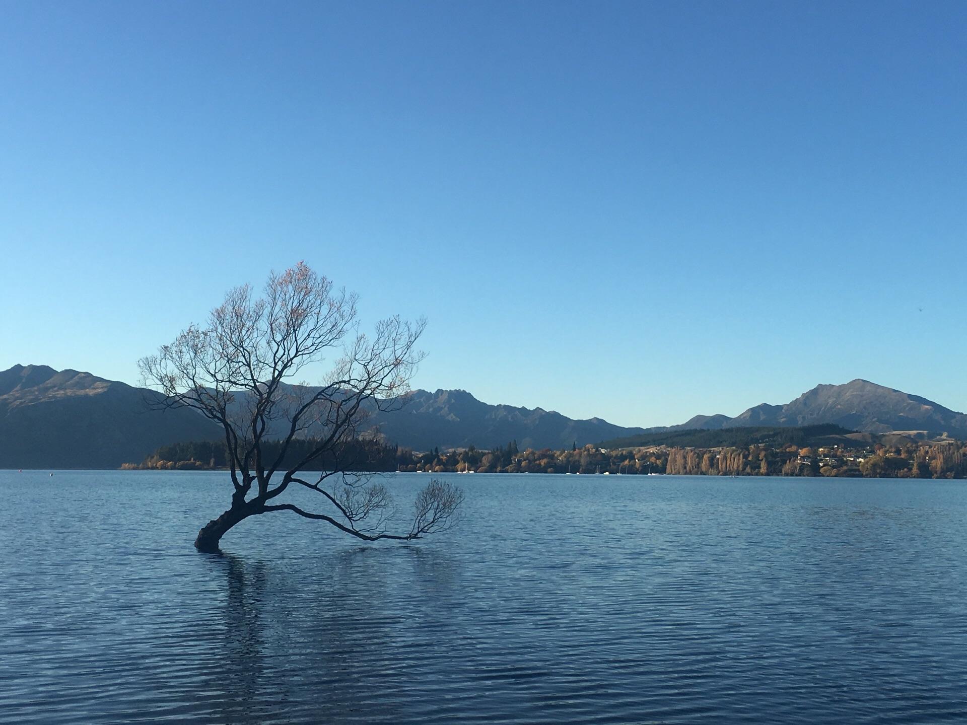 孤独的瓦纳卡之树