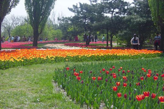 百花园旅游景点图片