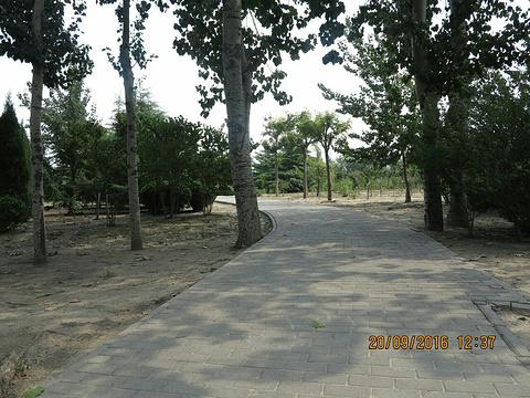 东营傅家遗址的图片