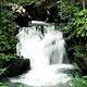 乌鲁庞森林保护区