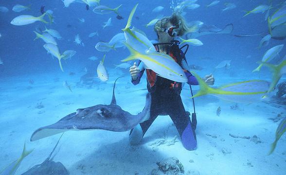 海底漫步体验旅游景点图片