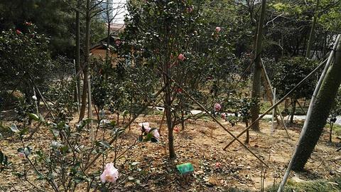 阳江北山公园