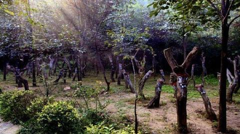 三王峪山水风景园