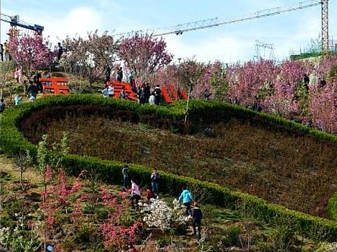 玉泉山城郊森林公园旅游景点图片