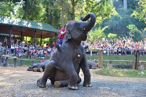 美莎大象营