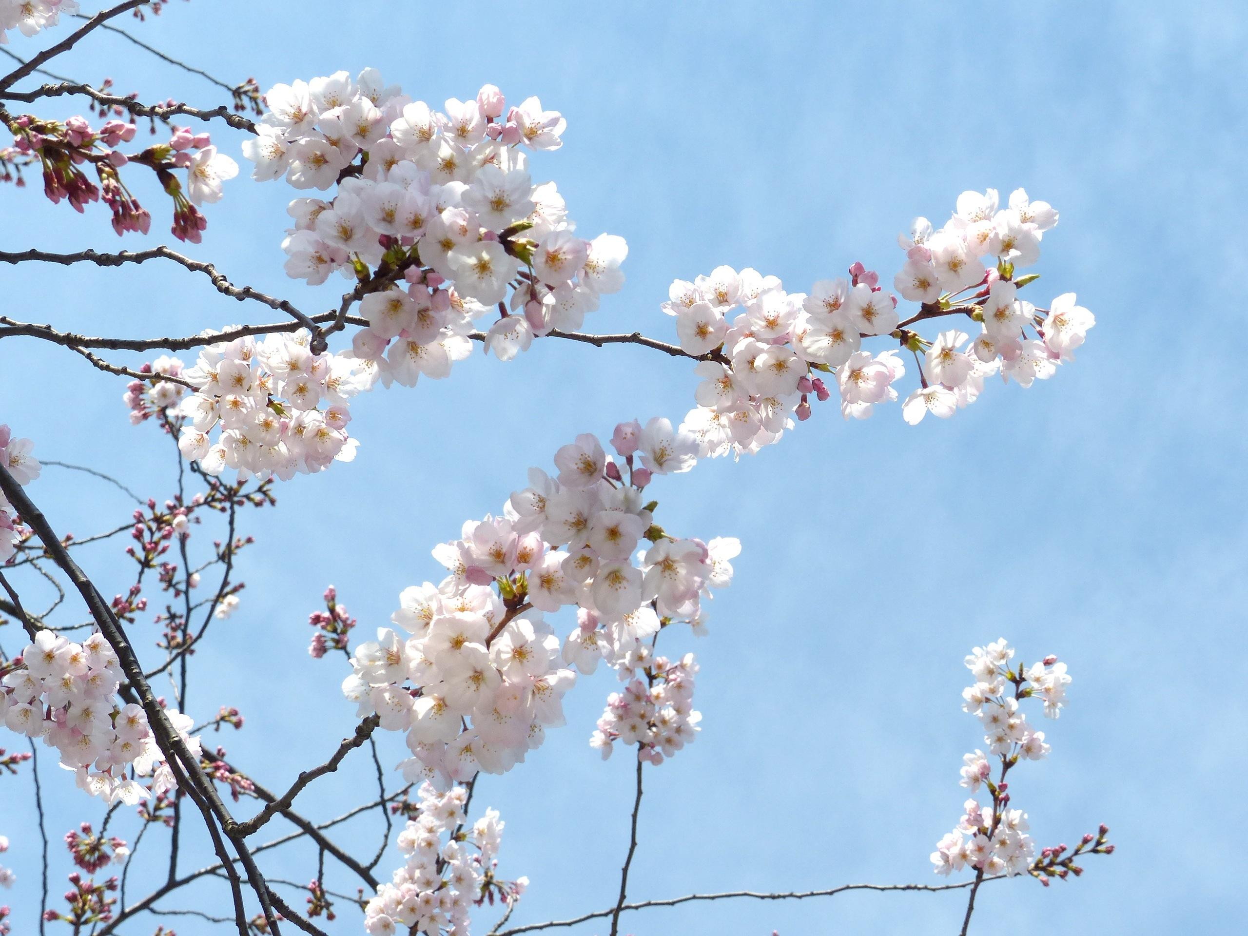 北海道夏季赏花6日行程
