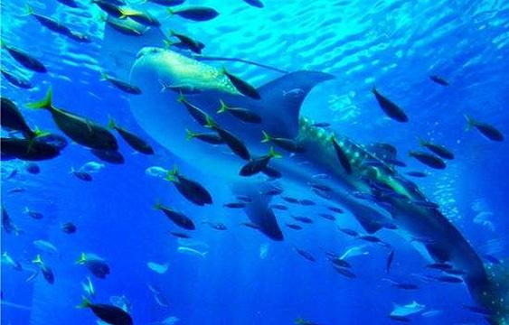 抚顺皇家极地海洋馆旅游景点图片