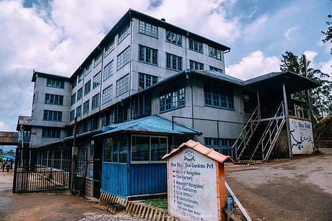 蓝房子茶厂