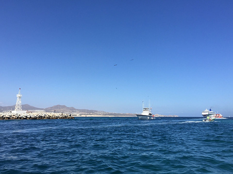 Los Cabos Tarzan Boats旅游景点图片