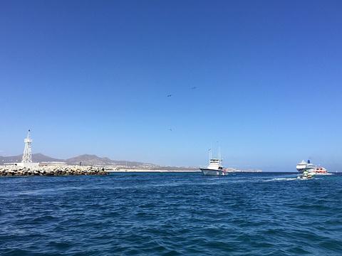 Los Cabos Tarzan Boats的图片