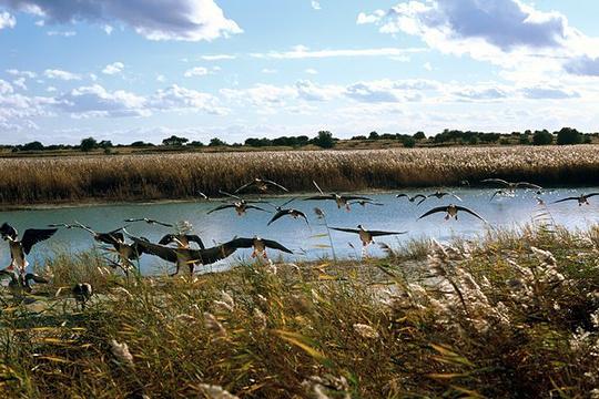 向海湿地旅游景点图片