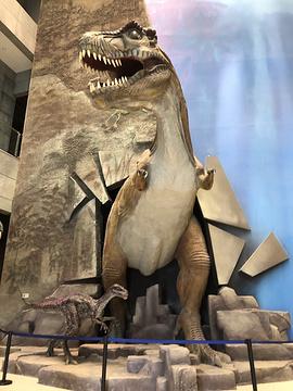 中国古生物博物馆