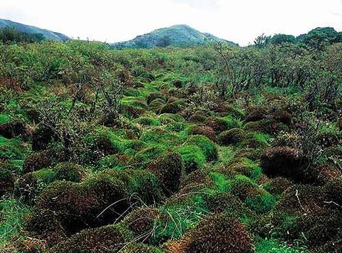 古田自然保护区的图片