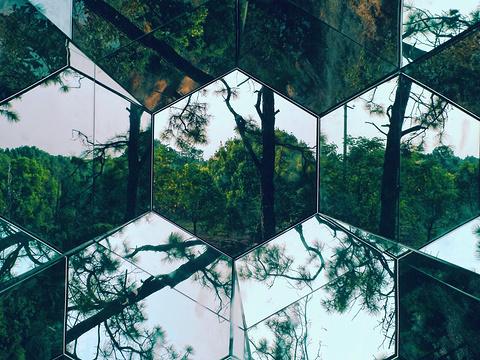 东湖杉美术馆旅游景点图片