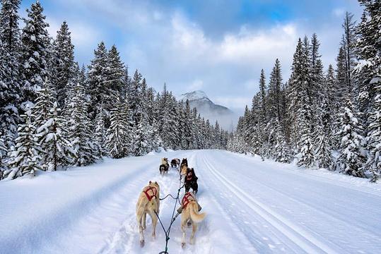 雪橇狗公园旅游景点图片
