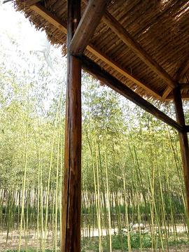 百雀林生态观光园