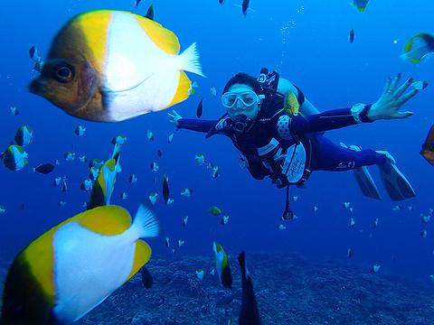 浅湾(潜水点)旅游景点图片