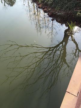 颍上县江心洲滨河公园
