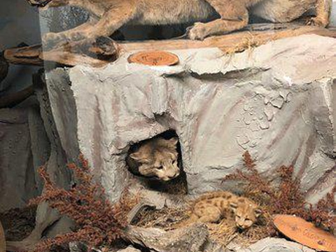 The Den - Jasper's Wildlife Museum旅游景点图片