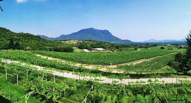 葡萄酒庄园旅游景点图片