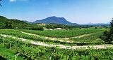 葡萄酒庄园