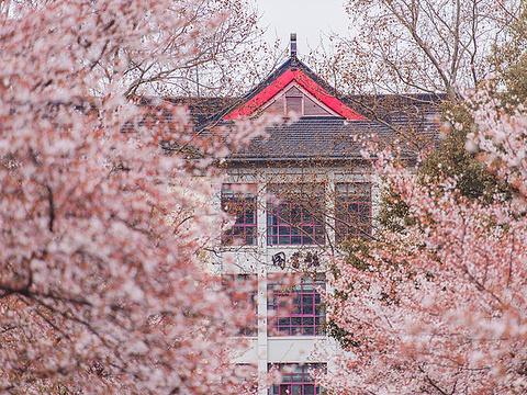 南京林业大学旅游景点图片