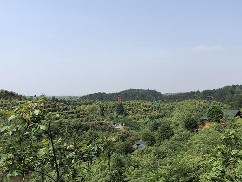 茴香小镇旅游景点图片