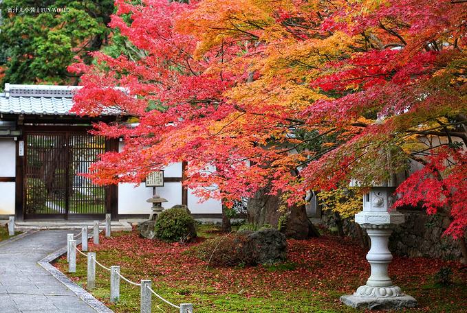 """京都""""枫""""情万种1日线路"""