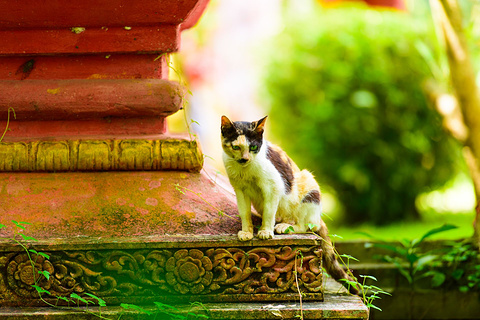 西双版纳傣族园-勐罕曼听佛塔寺的图片