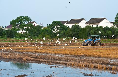 丹东白鹭自然保护区