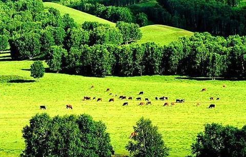 安固里草原