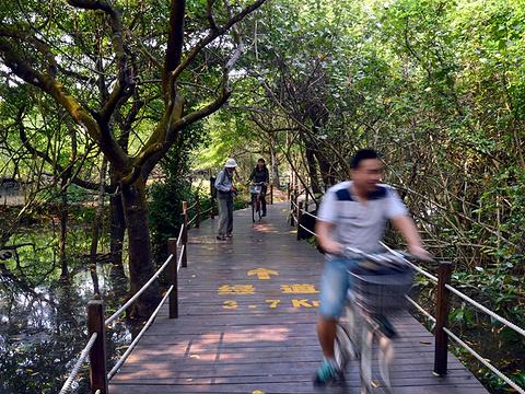 海南清澜红树林省级自然保护区旅游景点图片