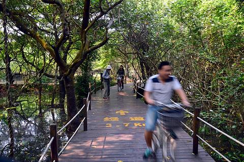 海南清澜红树林省级自然保护区的图片