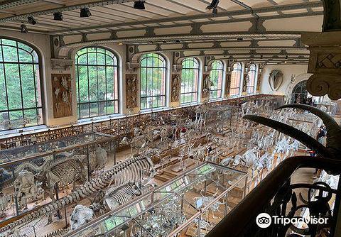 自然历史博物馆