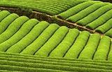 对川茶景园