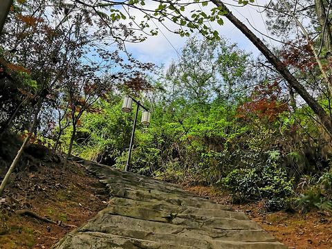 金鸡寨公园旅游景点图片