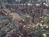 滨江月季园
