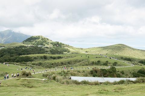 竹子湖的图片