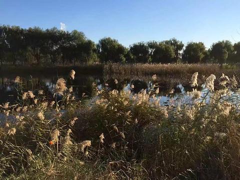 南湖公园的图片