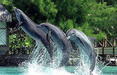 茉莉雅岛海豚中心